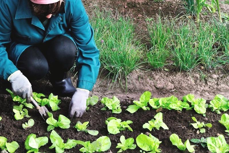 Favoriser les pratiques agricoles ecologiques