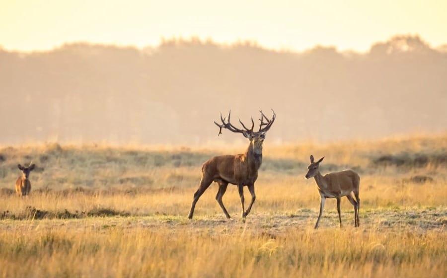 Élevages de bisons, de wapitis, de daims, de chevreuils, de chevaux, de volailles et de sangliers