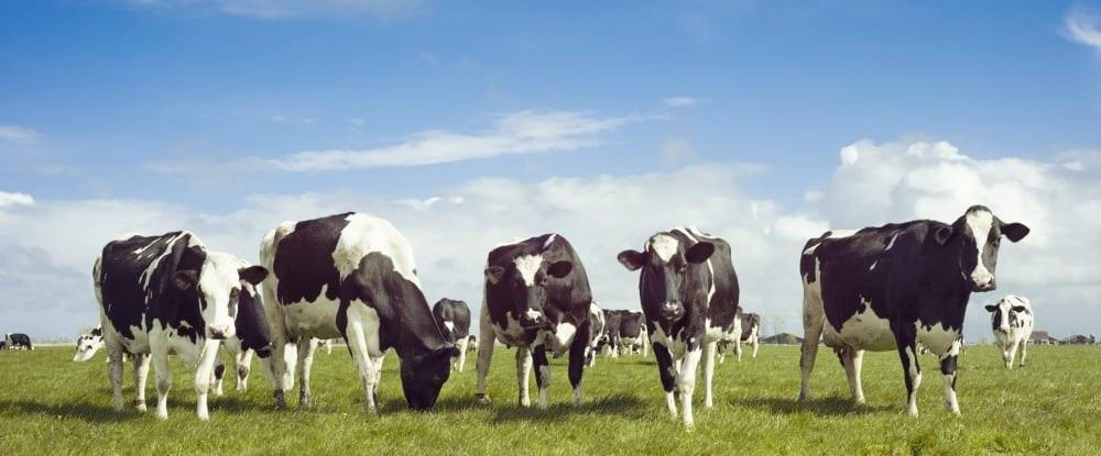 Portrait de la production laitière biologique