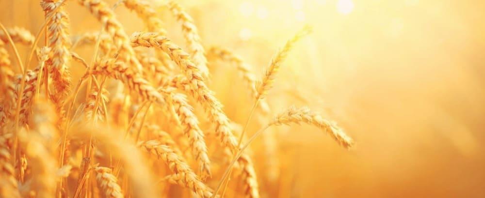 Portrait du secteur de la production de grandes cultures biologiques